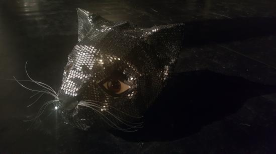 0 pisica
